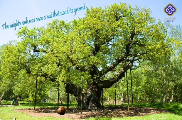 the mighty oak was once a nut that stood its ground.