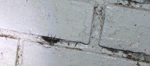 Beetle hiding