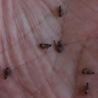 2. tiny flies 2
