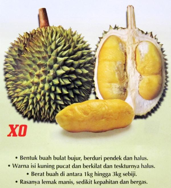 durian-xo
