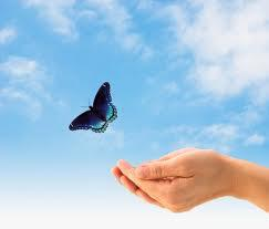 Butterfly freed
