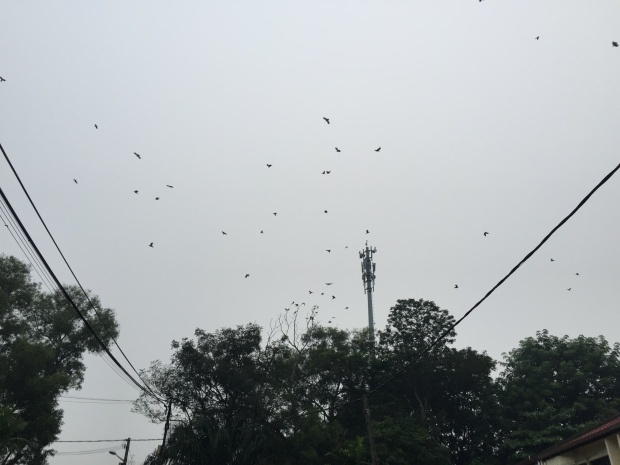 Crows on 911 - IMG_4423