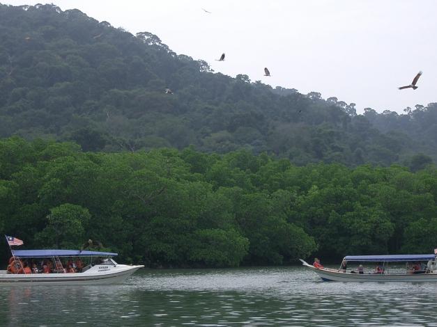 Eagle Feeding Langkawi