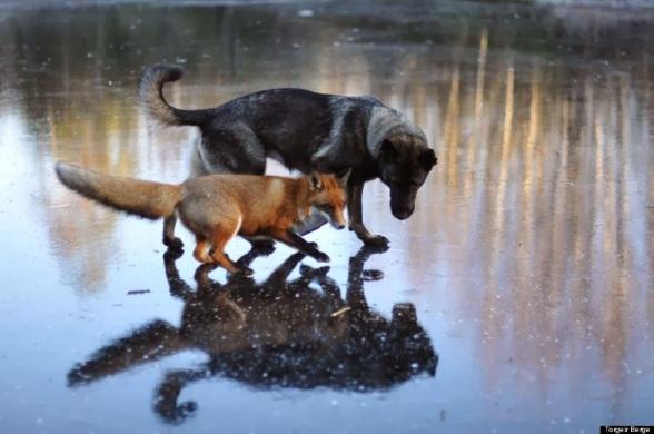 fox and dog.jpg