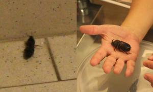 2nd Beetle Afterlife Sign