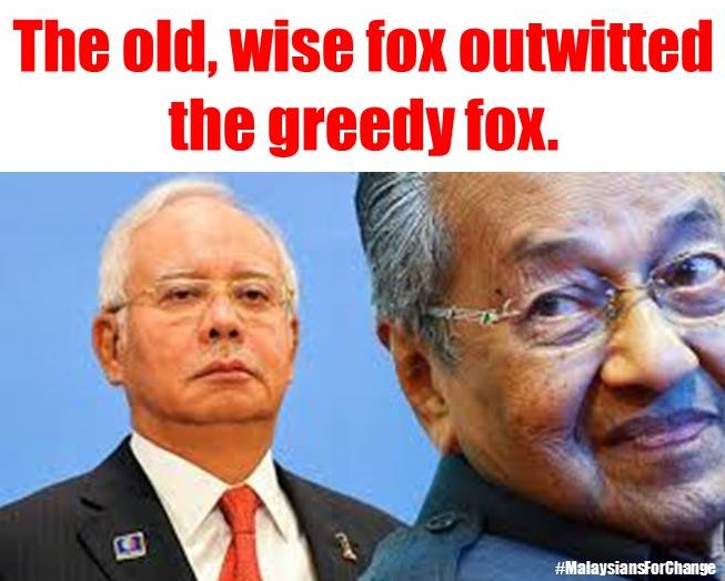 Wise Fox Outwitted