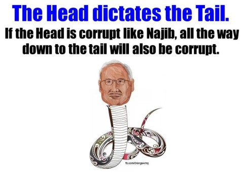 Head dictates Tail