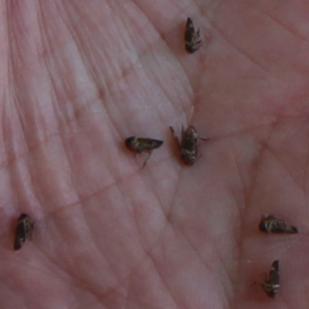 2-tiny-flies-2.png