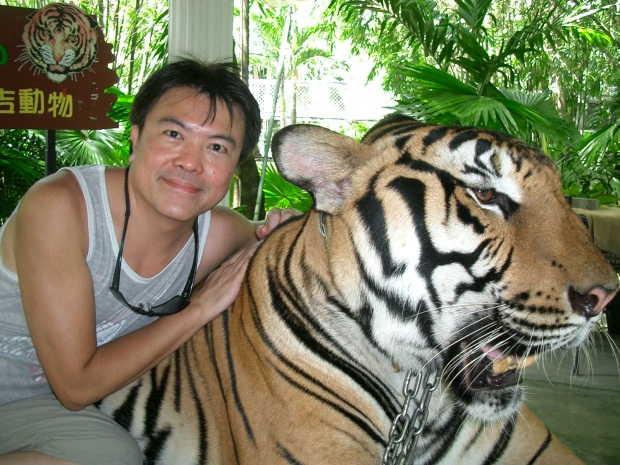 This image has an empty alt attribute; its file name is tiger-rc.jpg